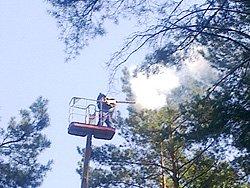 Обработка лесных массивов и парков от вредителей